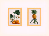 Botanical Fruit Prints