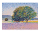 Trees in Provence Posters by Gail Wells-Hess