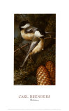 Chickadees Posters by Carl Brenders