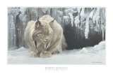 Dozing Lynx Prints by Robert Bateman