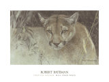 Tropical Cougar Posters by Robert Bateman