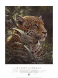 Symbol of the Rainforest Posters by Robert Bateman