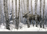 Spacer po lesie (A Walk in the Woods) Reprodukcje autor Stephen Lyman