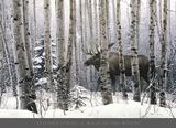 Un paseo por el bosque Lámina por Stephen Lyman