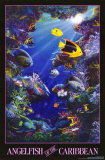Angelfish of the Caribbean Prints