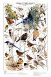 Oiseaux de jardin - Hiver II Posters