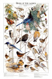 Birds of the Garden Winter II Poster