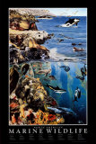 North American Marine Wildlife Art Print