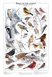 Oiseaux des jardins en hiver I Affiches