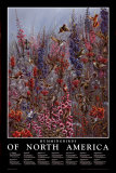 Colibris d'Amérique du Nord Art