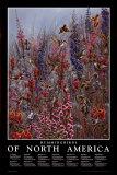 North American Hummingbirds Arte