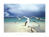 Driftwood, Antigua Posters by Ian Cumming