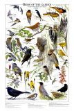 Birds of the Garden Summer Posters