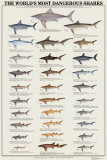 World's Most Dangerous Sharks Art Print