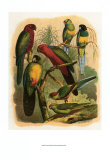 Tropical Birds II Prints by  Cassel