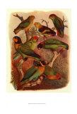 Uccelli tropicali Cassel  IV Poster di  Cassel