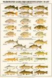 Poissons des eaux tièdes d'Amérique du Nord pour pêche sportive Affiche
