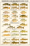 Warmwater Gamefish of North America Print