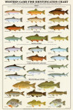 Western Gamefish Identification Chart Poster