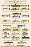 Pesci degli sportivi dei Grandi Laghi Poster
