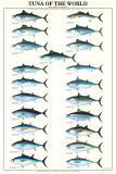 Tuna of the World Prints