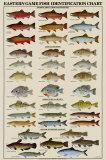 Poissons orientaux pour pêche sportive Affiches
