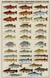 Eastern Gamefish Identification Chart Posters