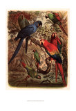 Tropical Birds III Posters by Cassel