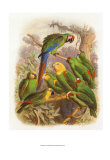 Tropical Birds I Print by  Cassel