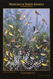 Warblers of North America Print