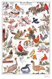 Oiseaux des Etats-Unis d'Amérique Poster
