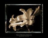 Bermuda Lilies Kunst af Talli Rosner-Kozuch