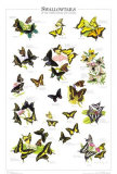 Swallowtails of US and Canada Prints