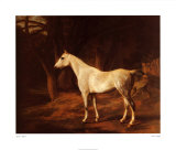 Forest Dapple Posters by Jacques-Laurent Agasse