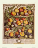 Fruits of the Season, Autumn Posters by Robert Furber