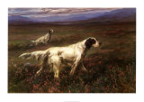 Setters on the Moors Prints by Maud Earl