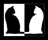 Black and White Cats Art