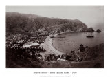 Avalon Harbor, Santa Catalina Island, California 1885 Print