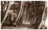 All&#233;e bord&#233;e de cocotiers, Waikiki, Hawa&#239;, 1916 Affiches