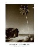 Ceylon, Palm Tree Prints by Lionel Wendt
