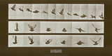 Bird Posters by Eadweard Muybridge