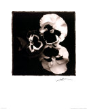 Pansies Posters by Angelos Zimaras