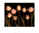 Spring Chorus Prints by S. G. Rose