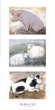 Animalités Affiches par Silvana Crefcoeur