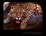 Jaguar Print by Gerry Ellis