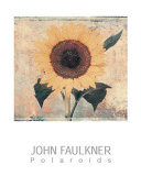Sunflower Art by John Faulkner