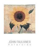 Sunflower Posters by John Faulkner
