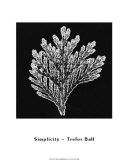 Simplicity Print by Trefor Ball