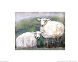 Sheep Art by Silvana Crefcoeur