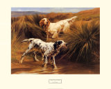 English Setters in a Marshland Poster by Thomas Blinks